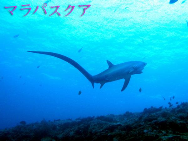 マラパスクア島・ダイビングツアー