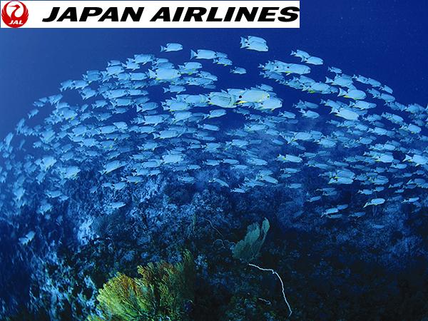 JAL直行便で行く パラオ・ダイビングツアー 5日間